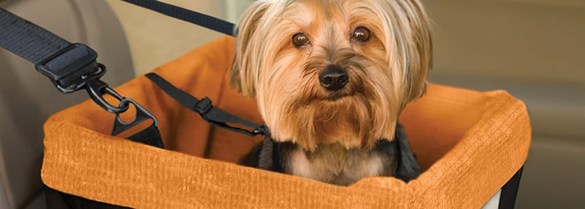 dog car booster seat | uk car finance